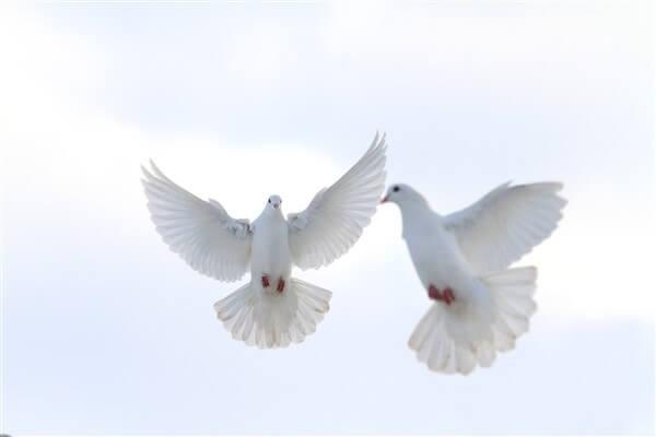Christian doves